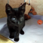 Appeal for blind kitten