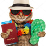 New rules for pet travel from 1 January 2021