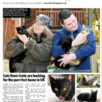 Cats from Crete are looking for the purr-fect home in the UK