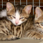Kittens to Adopt (updated 4th February 2015)