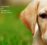 Friends of Animals Rethymno launches new website