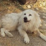 Andreas Liodakis Illegal Dog Breeder in Chania Court