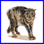 Guidelines for Feral Cat Caretakers