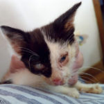 Appeal for help with three severely disabled cats