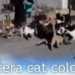 Aptera Cat Colony