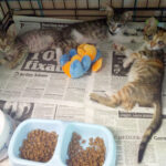 Disabled Kittens Need Your Help!