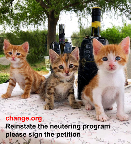 Reinstate the neutering program, between the CPJ rescue, Arche Noah and the municipality