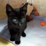 Appeal for blind kitten