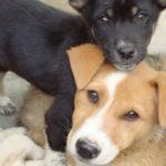 Animal Welfare Under Attack