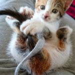 five more binned kittens