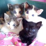 Four little orphans