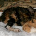Urgent Kitten Appeal