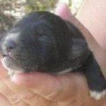 Larissa: Mammoth fine €270,000 for puppies slaughterer