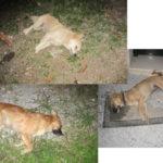 Cats & Dogs poisoned in Kalamitsi-Exopoli area