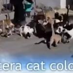 Aptera Cat Colony