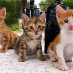 Percy, Ginny & Arthur